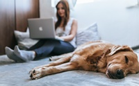 จัดอันดับ 5 ไอเดียแก้เบื่อ อยู่บ้านกับหมาแมวทำอะไรดีนะ!