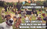รวมมีม (meme) สุดฮา น้องหมาในสถานการณ์โรค Covid-19