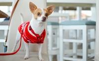 ไขข้อสงสัย! 5 เรื่องเจ้าของต้องรู้เมื่อน้องหมา