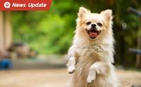 เซินเจิ้น ประเดิมเมืองแรกของจีนประกาศห้ามกินหมาและแมว