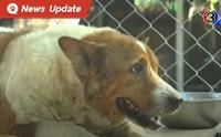 สุดเศร้า คนแห่ทิ้งสุนัขล้นวัด เจ้าอาวาสวัดคาดเป็นเพราะพิษจากโควิด-19