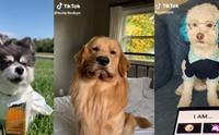 จัดอันดับ 5 น้องหมาน่ารัก ยอลฟอลโลว์ล้านอัพใน Tik Tok !