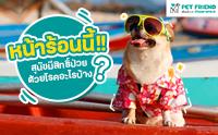 หน้าร้อนนี้ สุนัขมีสิทธิ์ป่วยด้วยโรคอะไรบ้างนะ แล้วจะป้องกันได้อย่างไร ?