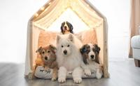 เผยเซ็ตภาพถ่าย 4 น้องหมาสุดน่ารัก กักตัวอยู่บ้านดูเพลินๆ!