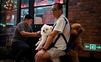 คนรักหมาเฮ! จีนประกาศ