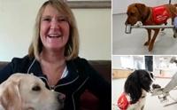 อังกฤษระดมทุน! จ่อฝึกสุนัขดมกลิ่นหาเชื้อโควิด-19 ในมนุษย์