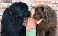 จัดอันดับ 5 สายพันธุ์น้องหมาตัวใหญ่ แต่หัวใจสีชมพู