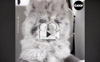 หมาหรือตุ๊กตา ทำไมน่ารักขนาดนี้ลูก !