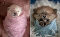 เห็นแล้วละลาย! ช่างภาพบราซิลจับลูกหมาถ่ายเซ็ตภาพสุดน่ารัก