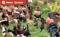 โควิดกระทบรุนแรง คาเฟ่หมา-แมว ปิดตัว สัตว์ถูกทิ้งมากขึ้น
