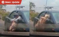 อุทาหรณ์สำหรับคนเลี้ยงสุนัข ... ป้าอุ้มหมานั่งตักขับรถพุ่งชนผู้ใช้ถนนคนอื่น