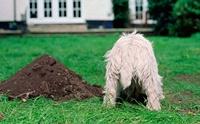 ทำไมไม่ควรฝังสุนัขไว้ที่สวนหลังบ้าน