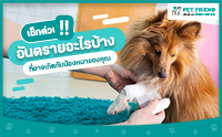เช็กด่วน !! เหตุการณ์อันตรายอะไรบ้าง ที่อาจเกิดกับน้องหมาของคุณ