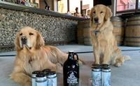 น่ารัก! 2 พนักงานสี่ขากับหน้าที่ส่งเบียร์ให้ลูกค้าช่วงโควิด-19
