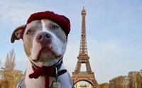 จัดอันดับ 5 ประเทศที่เป็นมิตรกับสัตว์เลี้ยงมากที่สุดในโลก !