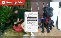 เจ้าของพิตบูลนมเย็น โดนคุก 6 เดือน ปรับ 1 หมื่น ศาลสั่งสิ้นภาพเจ้าของหมา!