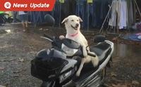 เอ็นดูน้อง ... หมาแสนรู้นั่งรอเจ้าของจ่ายตลาดบน จยย. จนกลายเป็นขวัญใจชาวตลาด