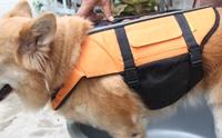 REVIEW : เสื้อชูชีพสุนัข