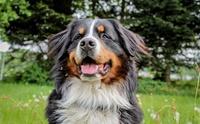 จัดอันดับ 5 สายพันธุ์น้องหมาขนสีดำ น่ารักละลายใจคนทั่วโลก!