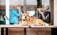 4 ทริค ชีวิตวิถีใหม่ (New Normal) ที่คนรักหมาหมาแมวต้องรู้!