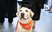เจ้า Moose สุนัขบำบัดได้รับปริญญาเอกกิตติมศักดิ์จาก ม.ดังในอเมริกา