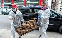 น่าเศร้า!! ชะตากรรมของสุนัขที่เจ้าของเสียชีวิตเพราะโรคโควิด-19