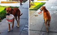 เปรูร้อนจัด! เผยคลิปหมาจรน่าสงสารเดินคาบถังขอน้ำกิน