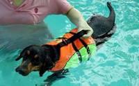 เกาะกระแสน้ำท่วม ... ฝึกน้องหมาว่ายน้ำ