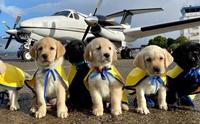 ฝ่าโควิด-19! นักบินอาสาพาสุนัขช่วยเหลือฝึกหัดบินไปส่งทั่วสหรัฐฯ