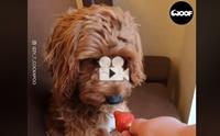 ใครบอกน้องหมาฟังภาษาคนไม่รู้เรื่อง มาดูคลิปนี้!