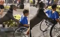 ไวรัลดัง! ตูบแสนรู้เข็นวีลแชร์ให้เด็กชายขาพิการ(คลิป)