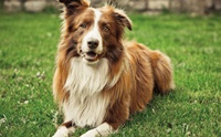 จัดอันดับ 5 สายพันธุ์น้องหมาเรียนรู้เร็ว ฝึกทักษะง่าย !