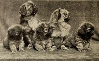 9 สุนัขพันธุ์แรกที่ได้รับการขึ้นทะเบียนใน AKC ตอนที่ 1