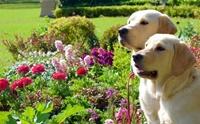 How to จัดสวนสวยอย่างไรให้ปลอดภัยกับน้องหมา