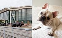 สุดช็อก! พบลูกสุนัขเฟรนช์ บูลด็อก 38 ตัวตายบนเครื่องบินที่แคนาดา
