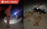 ชาวบ้านร้องตำรวจ ขุดซากหมา-แมวท้อง โดนวางยาผ่าพิสูจน์หาคนทำ