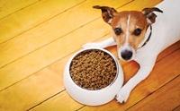 พิชิตโรคข้ออักเสบในสุนัขด้วยสารอาหาร