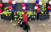 ชวนดูคลิปน่ารัก เมื่อสุนัขดมกลิ่นปลดเกษียณถูกเซอร์ไพรส์แบบนี้!