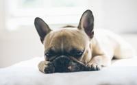ชวนหาคำตอบ น้องหมานอนหลับทั้งวันผิดปกติไหมนะ?
