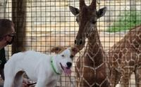 แก๊งหมาแมวบุกทัศนศึกษาที่สวนสัตว์ โชว์ความน่ารักกระตุ้นรับเลี้ยง!