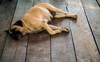 โคม่า (coma) ภาวะนิทราที่น้องหมาก็เจอได้