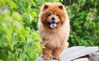 จัดอันดับ 5 สายพันธุ์น้องหมาบอดี้การ์ด ปกป้องบ้านได้หายห่วง!!