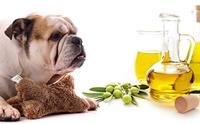 น้ำมันมะกอก กับ 6 ประโยชน์ที่ดีต่อน้องหมา !