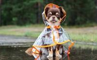 ฝนตกแล้วไง! ส่องไอเทมเด็ด ช่วยเจ้าตูบตัวแห้งสะอาดในหน้าฝน