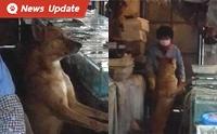 น้องหมาจรจัดแสนรู้ เฝ้าแผงขายปลา ตอบแทนแม่ค้าช่วยชีวิต ..