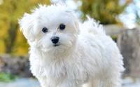 5 สายพันธุ์น้องหมาขนสีขาวสุดฮิต ที่ใคร ๆ เห็นก็อดใจไม่ไหว