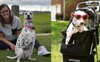 เจ้า Emma Roo ตูบใจแกร่งที่รอดจากขบวนการค้าเนื้อสุนัข!