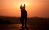 แกะรอยการตาย! สุนัขตัวแรกในสหรัฐฯ ที่ตรวจพบเชื้อ Covid-19