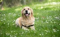 เคล็ด(ไม่)ลับ! เลี้ยงหมาแมวแบบ Eco-Friendly ใคร ๆ ก็ทำได้