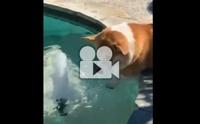 อากาศร้อนๆ แบบนี้ ว่ายน้ำกันสักหน่อย ..